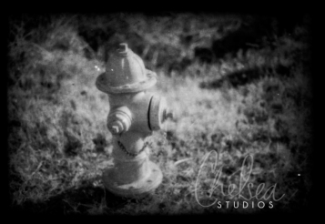 Fire Hydrant | Nolensville, TN | Film Negative
